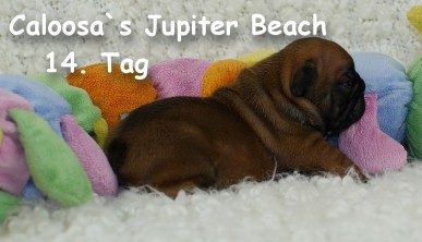 jwurf_jupiter beach_14.tag_1